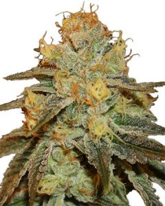 Bruce Banner is deliciously potent.