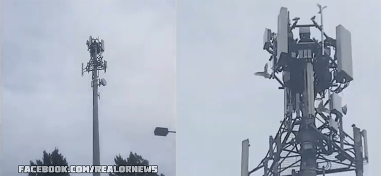 Birds Attack 5G Tower
