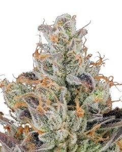 Zkittlez fragrance is reminiscent of the candy.